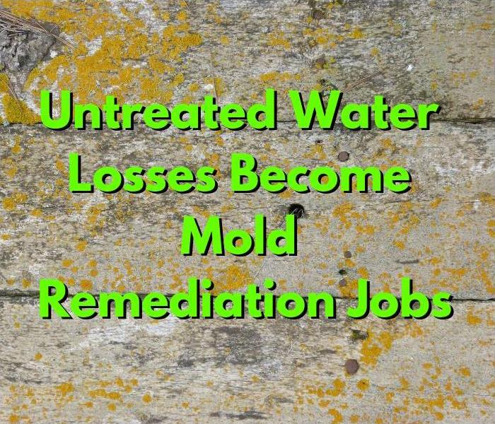 Mold Remediation What Happens When You Don't Treat Your Water Damage Quickly?